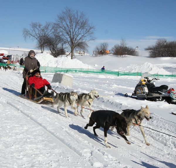 Quebec Winter Carnival Dog Sledding
