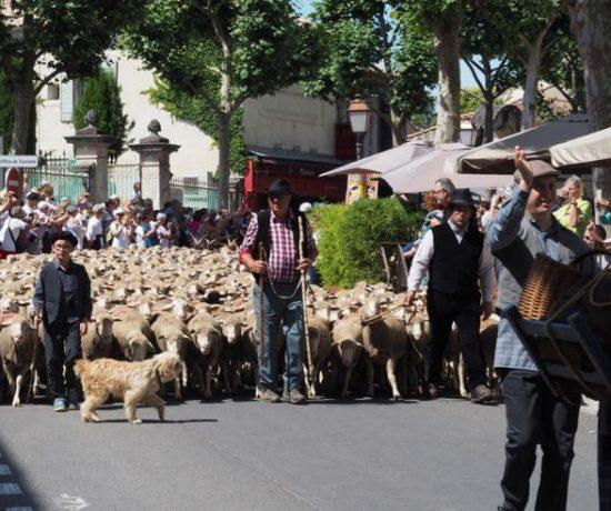 Fête de la Transhumance in St-Remy-de-Provence