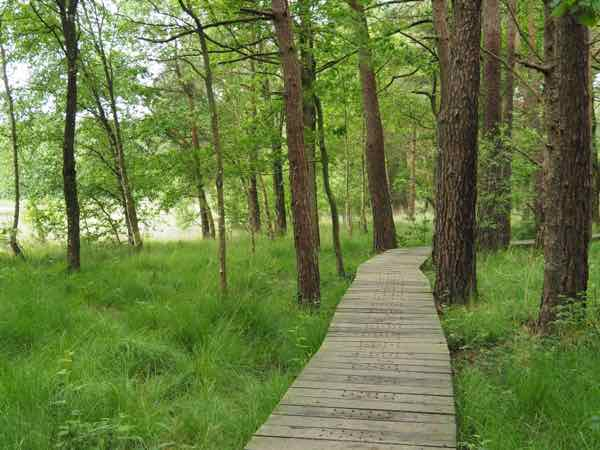 Walking path at Broceliande