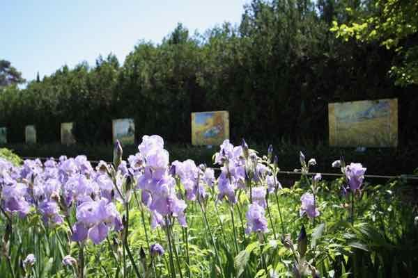 Garden at the Saint-Remy-de-Provence asylum