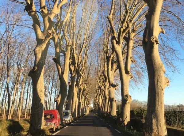 Country road near Marseillan, France