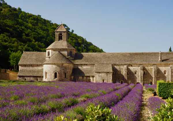 Lavender at Abbey de Senanque