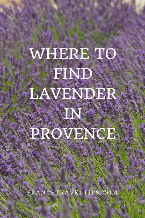 Where to find lavender in Provence