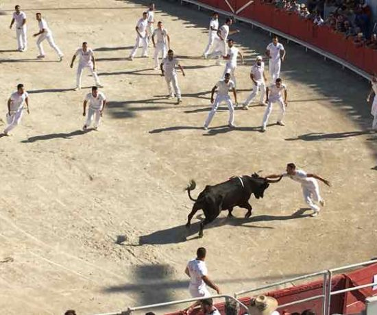 Razeteurs and one bull-Cocarde d'Or