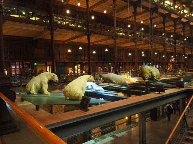 Polar bears -Grand Gallery of Evolution (J. Chung)