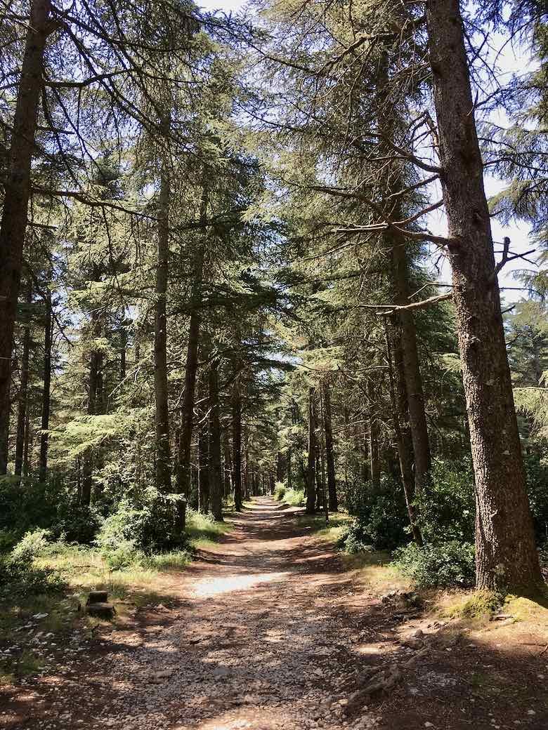 Les Portalas Trail-La Foret des Cedres (J. Chung)