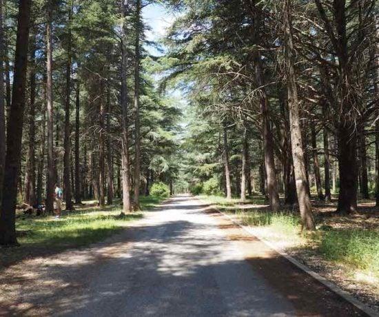 Trail at La Foret des Cedres Bonnieux (J. Chung)