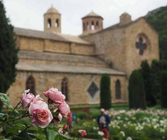 Rose garden at Abbaye de Fontfroide